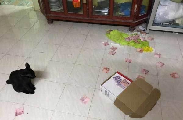 Vợ hý hửng tìm được quỹ đen của chồng nhờ mèo yêu