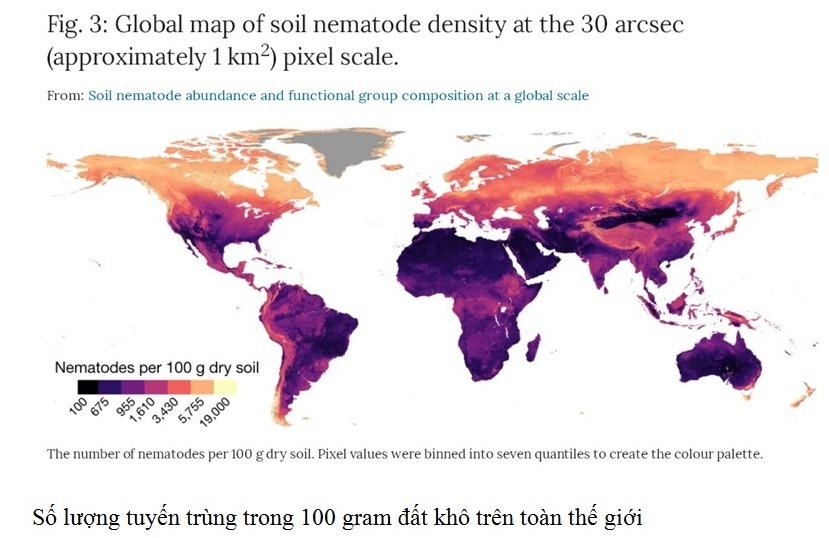 Nhà khoa học nữ VN có công trình được đăng trên tạp chí khoa học uy tín nhất thế giới