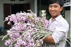 Mất trộm lan Phi Điệp đột biến 5 cánh trắng 2 tỷ 'rúng động' Phú Thọ