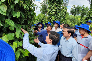 Farmers: Opportunities and challenges in global integration
