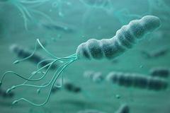 Quá nhiều vi khuẩn HP sinh sống trong dạ dày, cơ thể sẽ cầu cứu bằng 3 tín hiệu này