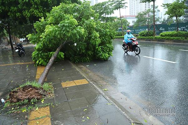 Dự báo thời tiết 27/8, Hà Nội mưa dông gió giật