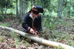 Trồng rừng cây bóc vỏ bán, lão nông thu tiền tỷ giấu đầy gác bếp