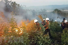 Forest fire destroys 200ha of forest in Phu Yen