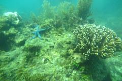 Malaysia hỗ trợ 100.000 USD nuôi tái tạo san hô ở vịnh Nha Trang