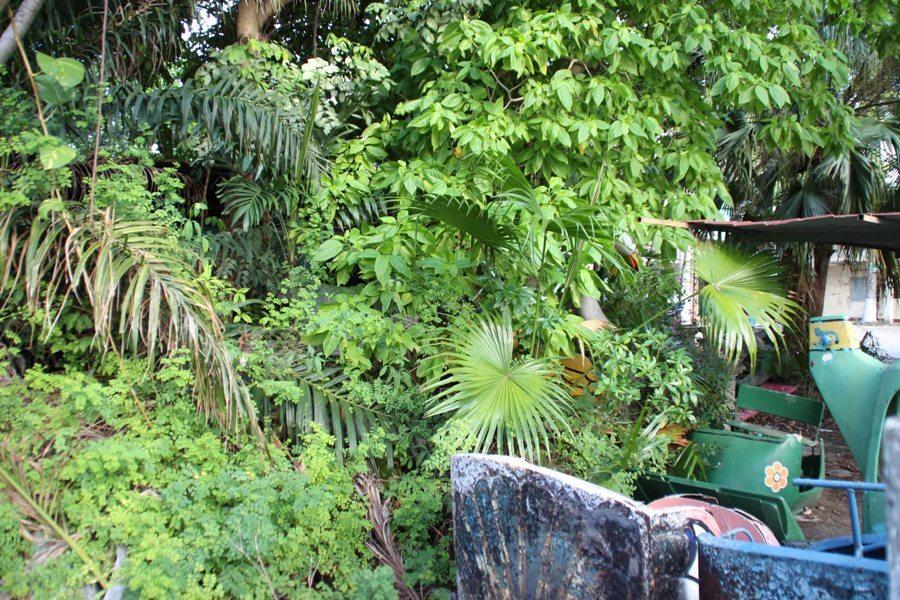 Đà Nẵng bán lô đất 'vàng' 51 tỷ, sau 9 năm tính chuộc lại làm công viên