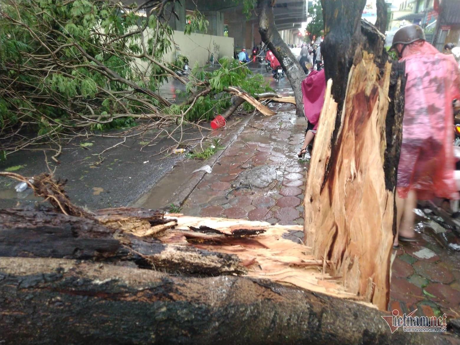 Giông lốc 'đánh úp', cây đổ la liệt giữa phố Hà Nội, 1 thanh niên tử vong