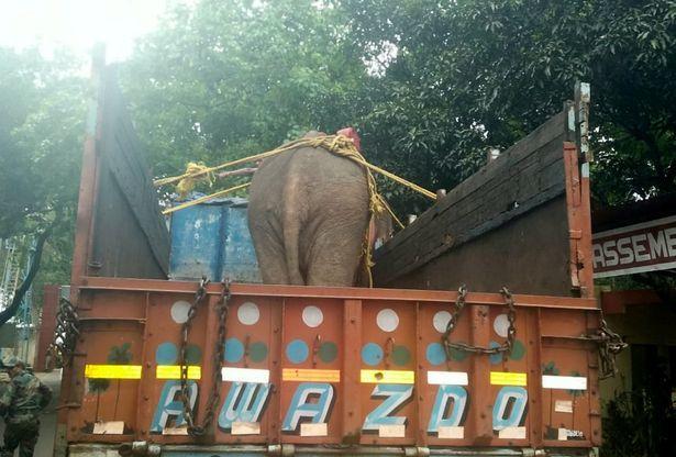 Giải cứu,voi,động vật,rừng,mắc kẹt,Ấn Độ