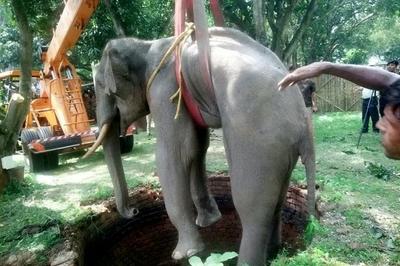Xem giải cứu chú voi bị mắc kẹt dưới giếng sâu