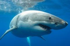 Video cá mập hung dữ tấn công thuyền đánh cá