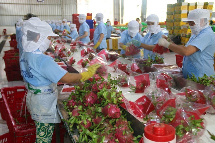 Vietnam's farm produce uncompetitive because of packaging problems