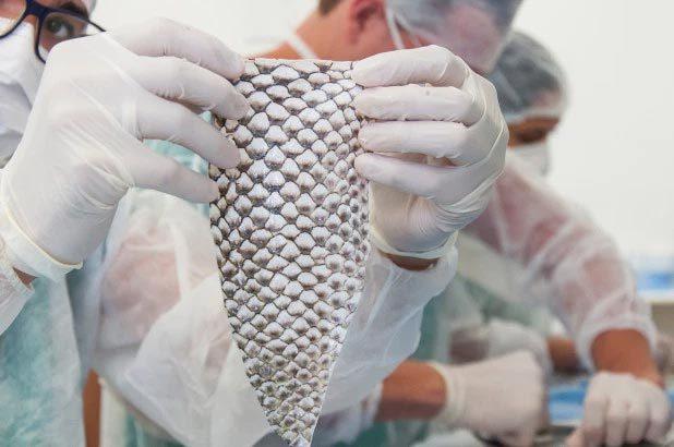 Dùng da cá rô phi tạo cơ quan sinh dục nữ cho người chuyển giới