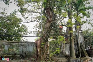 Làng ngoại thành Hà Nội sắp thu về 150 tỷ từ bán đấu giá gỗ sưa