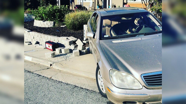 Bị nhốt trong xe, chó cưng 'lái' Mercedes của chủ đâm vào tường