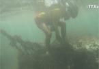Trash threatens Da Nang coral reef