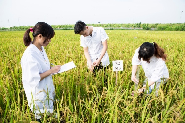 Young people in Vietnam not interested in agricultural studies