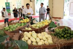 EU enhances inspections on Vietnam's agricultural products from Sept 1