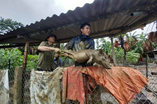 Thủy điện xả nước cuốn trôi cầu, dân Hà Tĩnh tất tả ôm lợn, gà chạy lũ