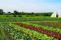 Farmstay G7- kênh đầu tư BĐS trang trại cho người ưa khám phá, trải nghiệm