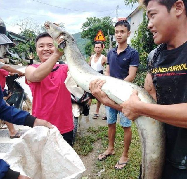 Nghệ An: Vớt được cá lệch dài 2 mét, bán giá 5 triệu