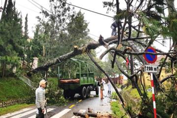Mưa lũ chia cắt đường, gió quật cây đổ ngổn ngang ở Lâm Đồng