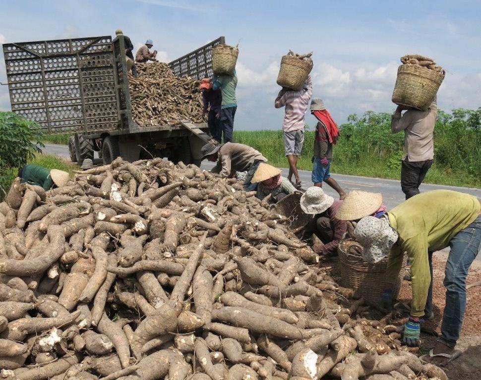xuất khẩu sắn,xuất khẩu nông sản,thị trường trung quốc,xuất khẩu sang trung quốc