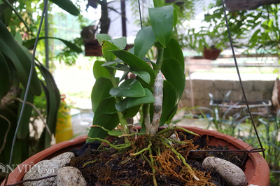 8X Lạng Sơn mê phong lan rừng: Kiếm trăm triệu từ 1 câu 'nhỡ mồm'