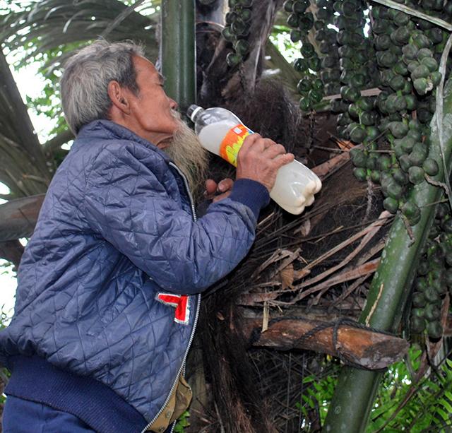 Lạ kỳ dừa núi cho rượu, khách đến nhà là trèo lên lấy rượu uống