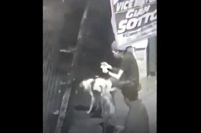 Mải chơi game, thanh niên liên tiếp bị chó tè vào người