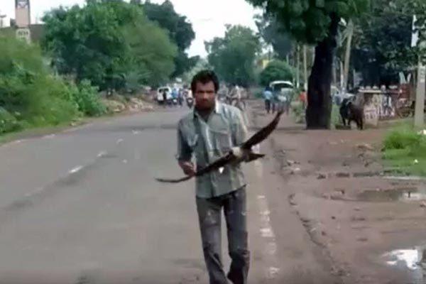 động vật,Ấn Độ,quạ,trả thù