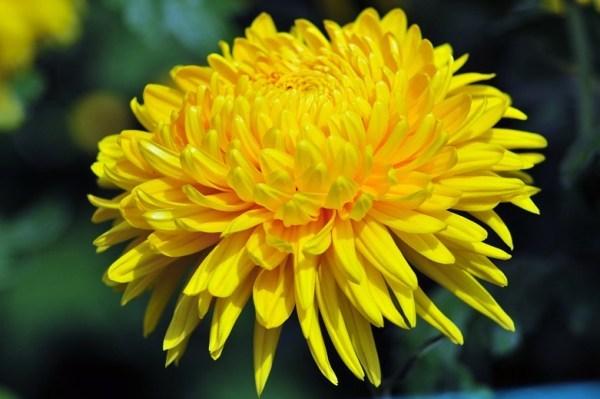 Phong thuỷ bất ngờ từ những loài hoa quen thuộc cắm trong nhà