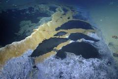 Hồ nước độc dưới đáy biển giết chết mọi sinh vật bơi vào