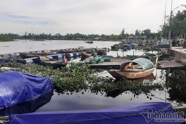 82 tấn cá lồng bè ở Hà Tĩnh chết phơi bụng trắng xóa