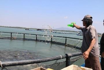 Time for Vietnam to tap ocean aquaculture potential