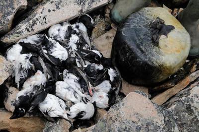 Hải cẩu nhồi xác chim và những món ăn bốc mùi nhất thế giới