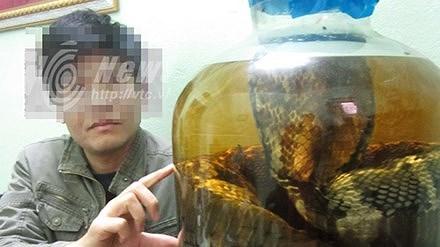 Cơ hội ngàn vàng đến: Dàn trận, tóm sống đại hổ chúa khổng lồ 7m