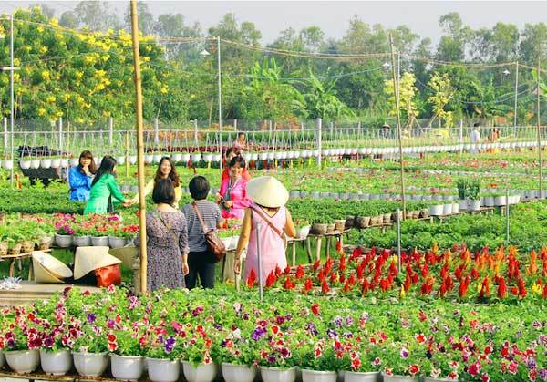 Be a farmer for a day in Dong Thap