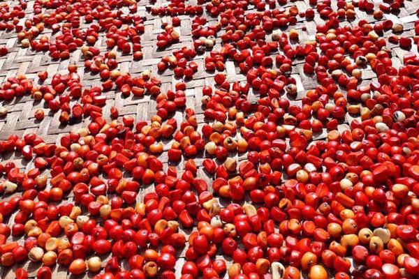 Hạt phổ biến, rẻ 'như cho' ở Việt Nam nay có giá bán 'đắt như vàng'
