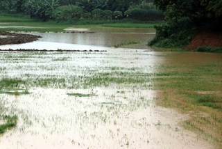 Vietnam should be proactive in coping with natural disasters: experts