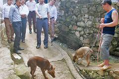 Độc đáo: Nơi biên viễn có loài chó cộc đuôi lạ ví như 'thần giữ của'