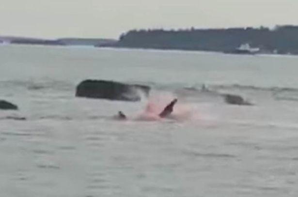 cá mập,tấn công,Canada,du khách,săn mồi,động vật