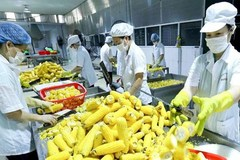 Door open wide for VN farm produce export to Europe