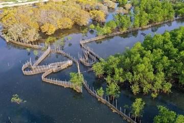 A visit to Ru Cha mangrove forest in Autumn