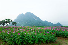 Walking among the flowers on Khai Trung plain