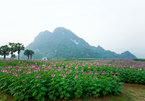 Walking among the flowers on Khai Trung plain