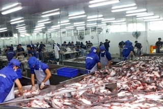 Vietnam's Tra fish companies see stock prices plummet