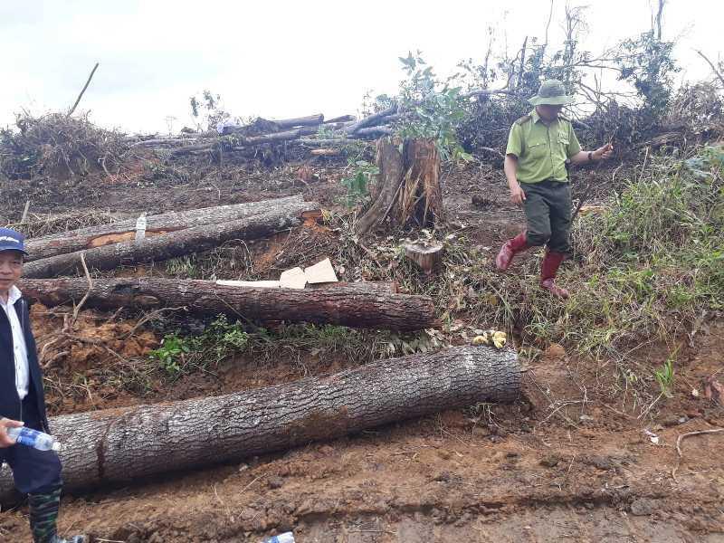 Bắt 3 đối tượng phá rừng nghiêm trọng ở Lâm Đồng