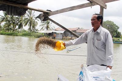 Chuyện Tám Đậu còng lưng nuôi 2.000 tấn cá/năm, ôm tiền tỷ lo chuyện thiên hạ