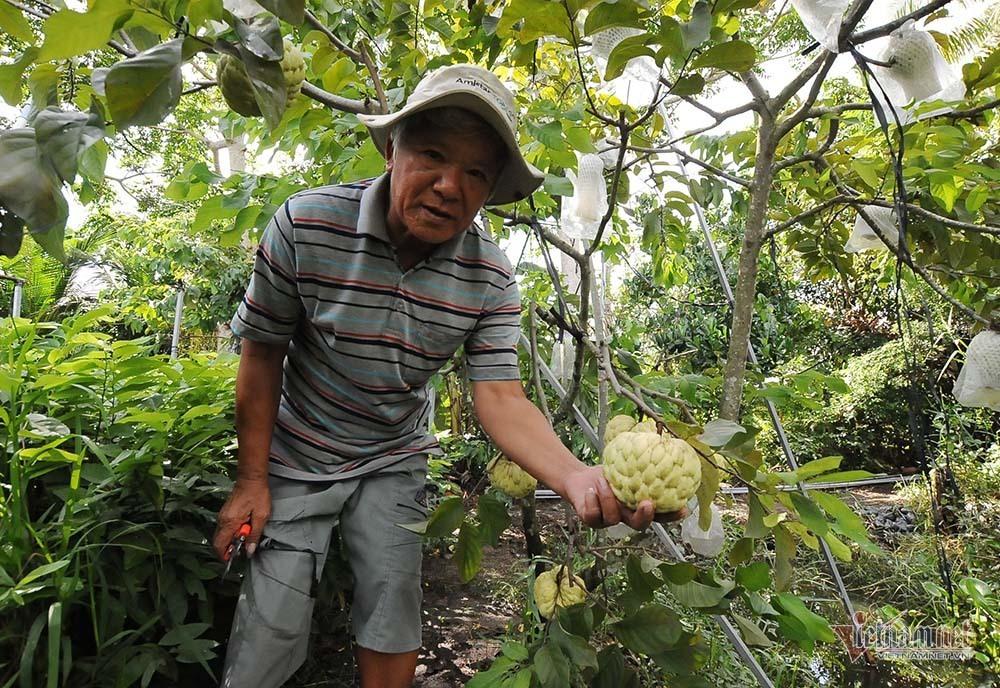 Vét hết vàng mua cây na trái siêu to khổng lồ nặng 1,5kg