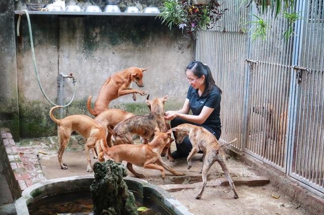 Cận cảnh đàn chó Phú Quốc bạc tỷ của 'bóng hồng' xinh đẹp Hà Nội